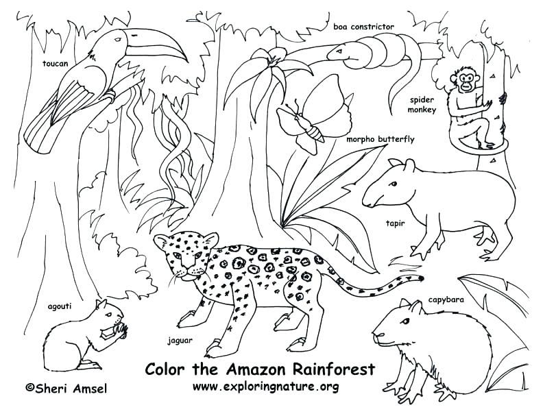 792x607 Lovely Of Coloring Pages Gallery Coloring Pages Coloring Pages
