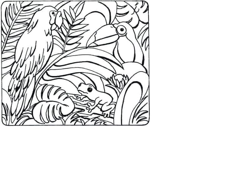 736x552 Printable Rainforest Coloring Pages Drawn Tropical Tropical