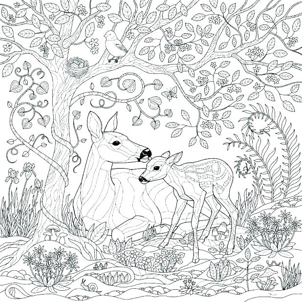 Tropical Rainforest Coloring Pages at GetDrawings | Free ...