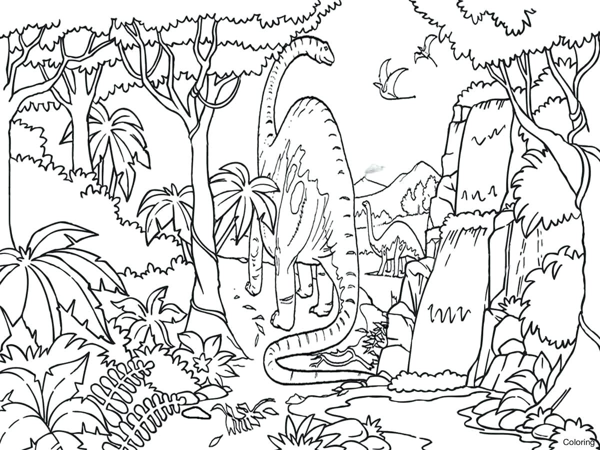 1200x900 Tropical Rainforest Color Pages Perfect Coloring On For Kids