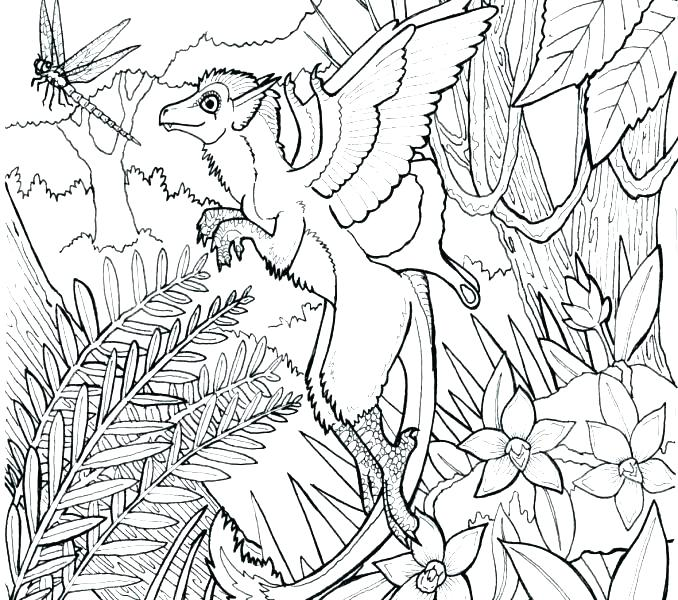 678x600 Tropical Rainforest Coloring Pages Free Tropical Coloring Pages