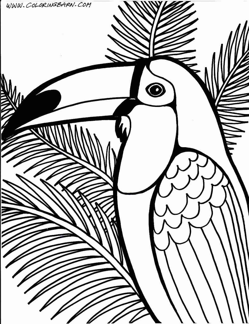 1000x1303 Tropical Rainforest Drawing Coloring Pages To Noticeable Color