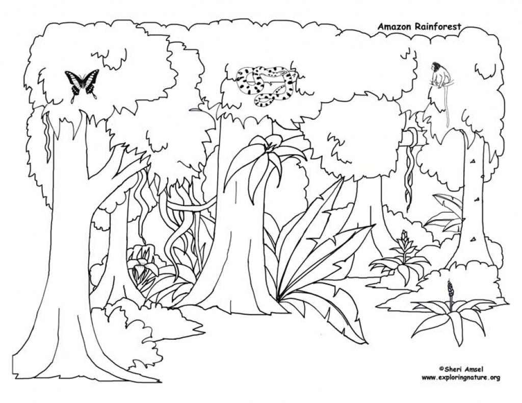 1024x790 Unique Tropical Rainforest Coloring Page Coloring Pages