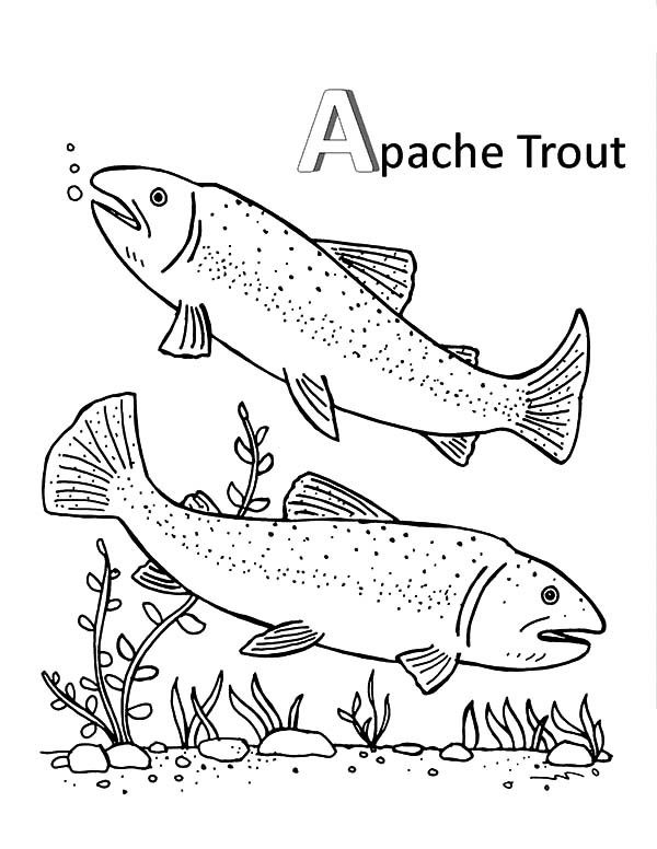600x776 Apache Trout Mating Coloring Pages Best Place To Color