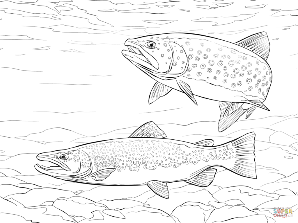 1024x768 Trout Coloring Page Brown Free Printable Pages Click The Get Bubbles
