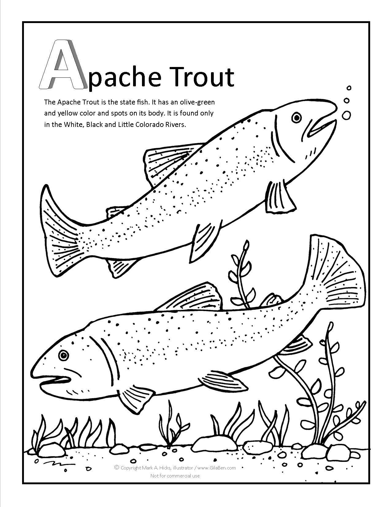 1275x1650 Apache Trout Coloring Page