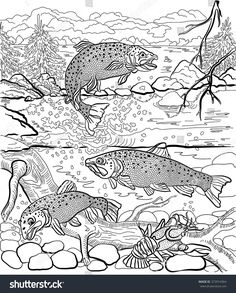 236x293 Brown Trout Coloring Page From Trouts Category Select