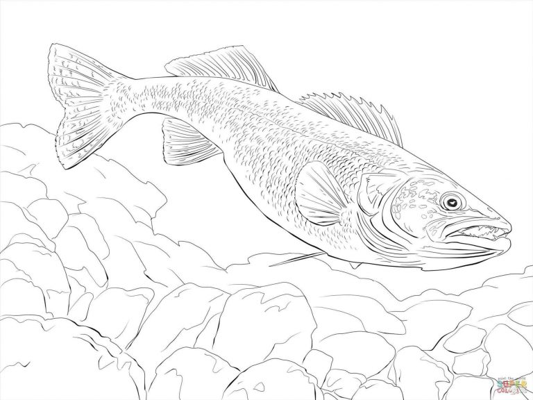 768x576 Coloring Pages Of Rainbow Trouts Copy Curiosity Dash Funy