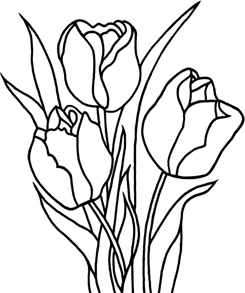 857x1024 Printable Tulip Coloring Pages For Kids Download