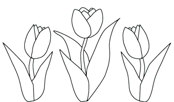 600x351 Tulip Coloring Page Tulip Coloring Pages Flower Page Printable