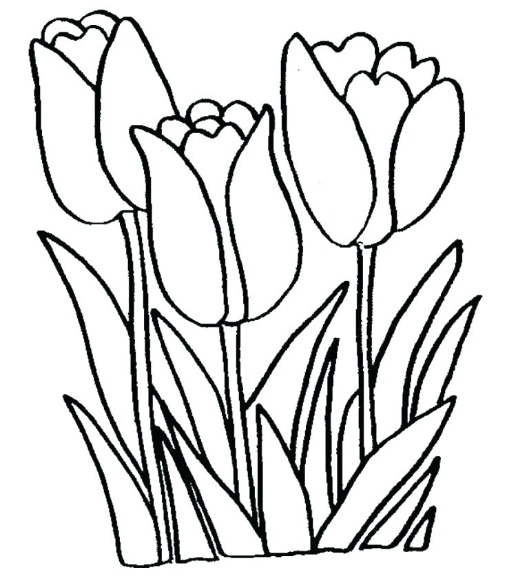 736x842 Tulip Coloring Page Tulip Coloring Pages Tulip Coloring Pages Free