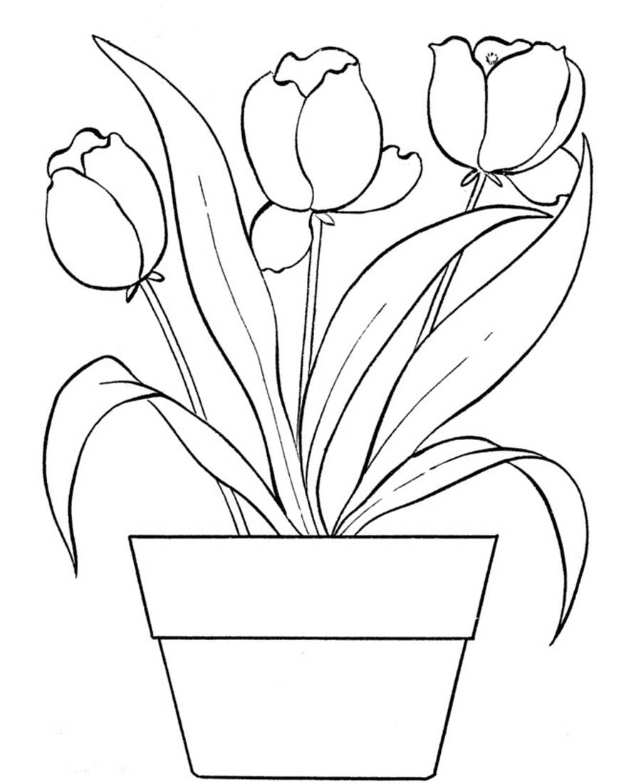 900x1101 Tulip Coloring Pages For Kids Me Endearing Enchanting