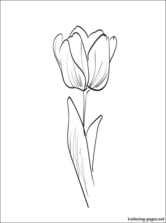 560x750 Tulip Coloring Pages Pdf Tulip Coloring Page Coloring Pages Tulip