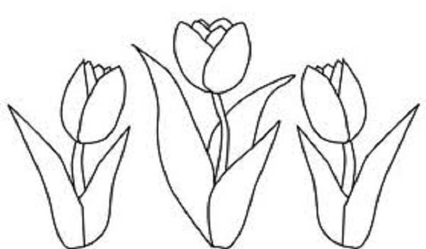600x351 Tulip Coloring Pages Trend Bebo Pandco