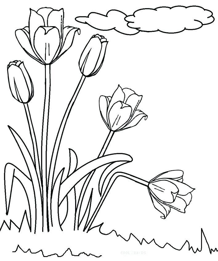 708x850 Tulip Coloring