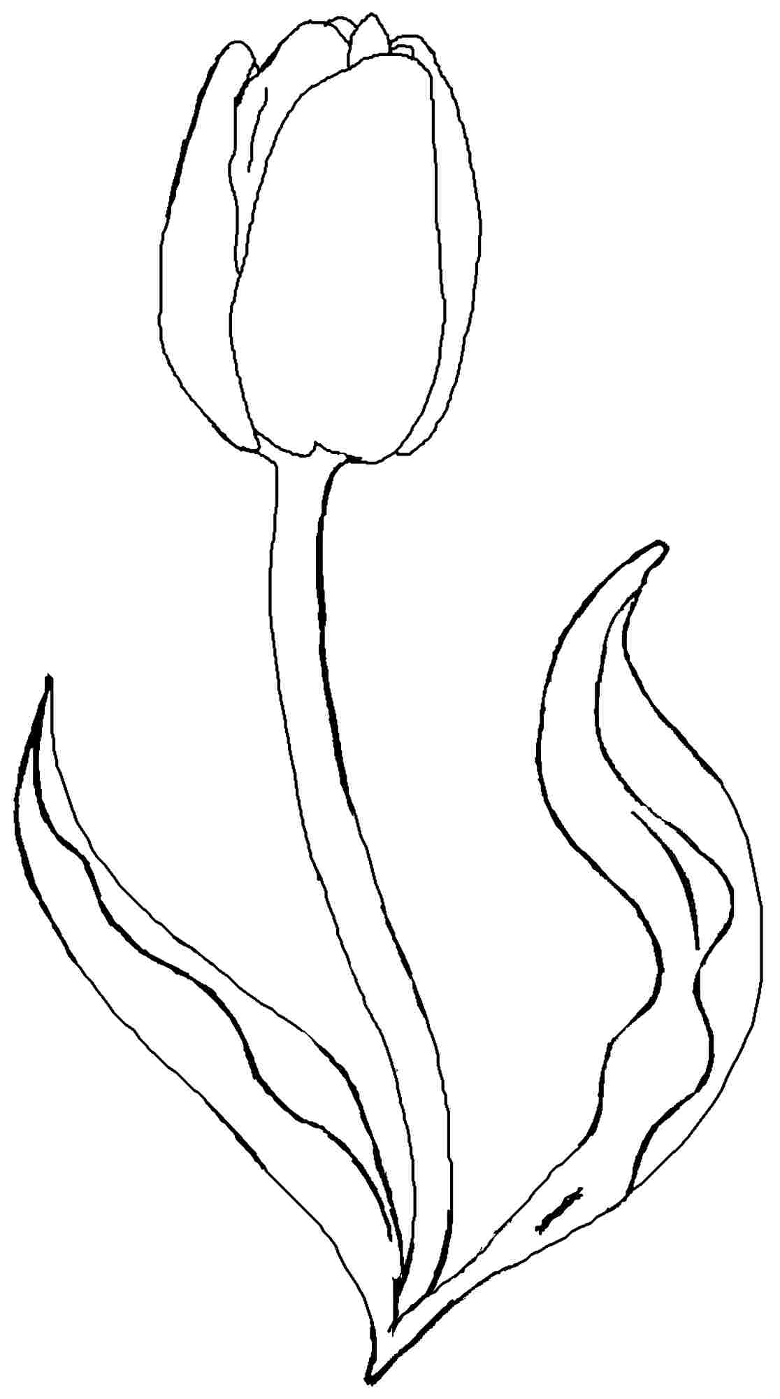 1116x2000 Tulip Flower Coloring Pages Free Printable Tulip Coloring Sketch