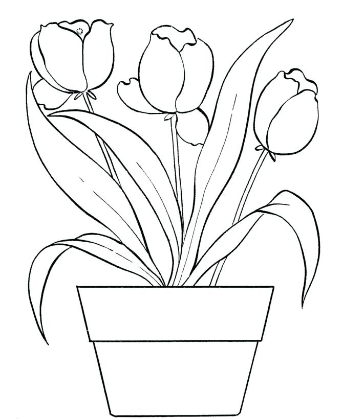 670x820 Tulips Coloring Pages Beautiful Tulips On The Pot Coloring Page