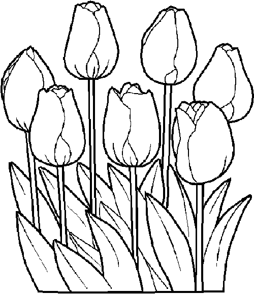 500x578 Fantastic Tulip Coloring Pages Images