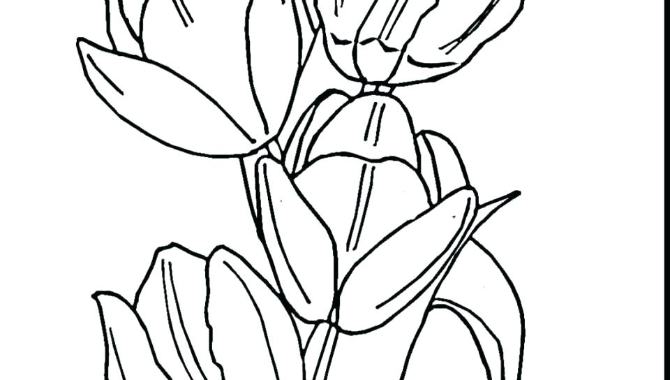 960x544 Tulips Coloring Pages Tulip Coloring Page Seven Tulips Coloring