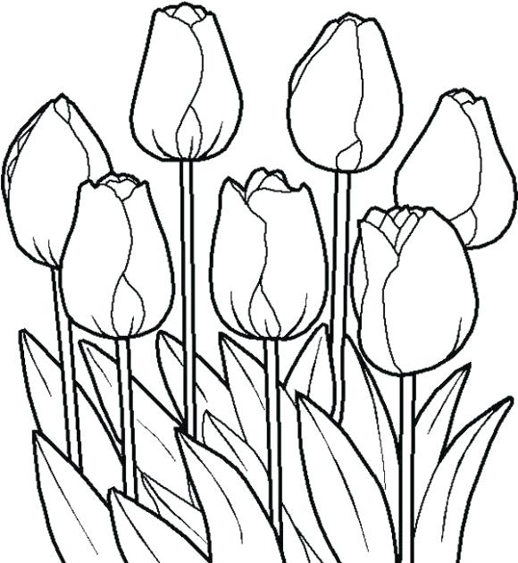 580x630 Tulip Coloring Pages
