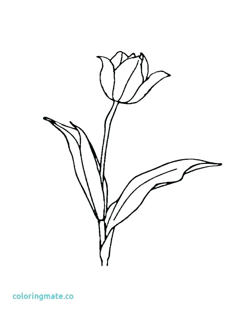 750x1000 Tulip Coloring Pictures Teleks Site