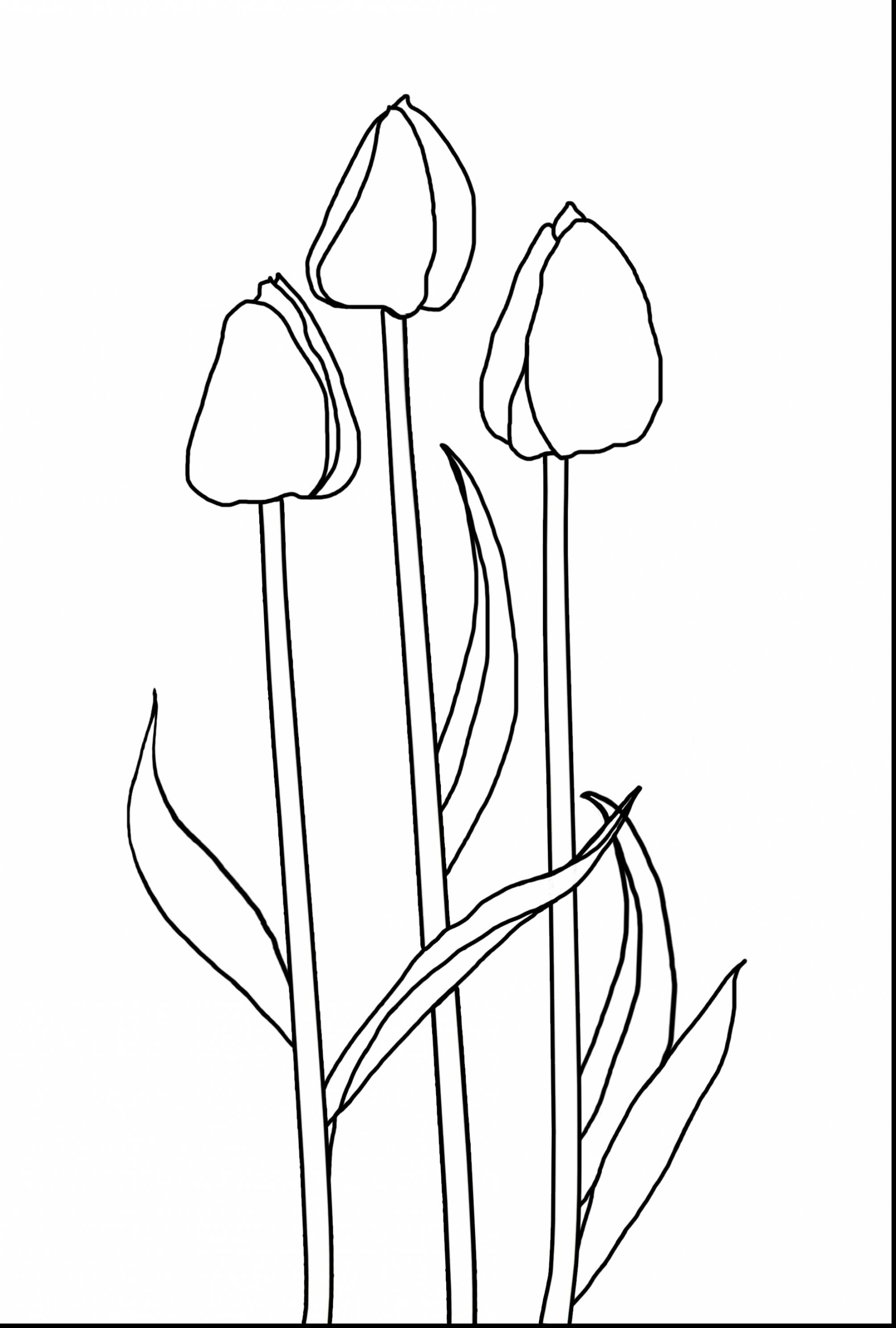 2008x2976 Fresh Tulip Flower Coloring Sheet Collection Printable Coloring