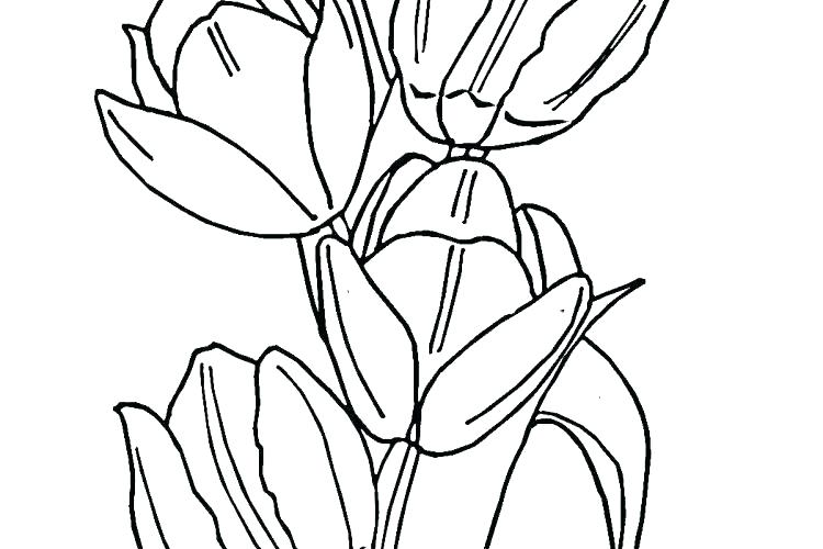 750x500 Tulip Coloring Page Tulips Coloring Pages Tulip Coloring Page