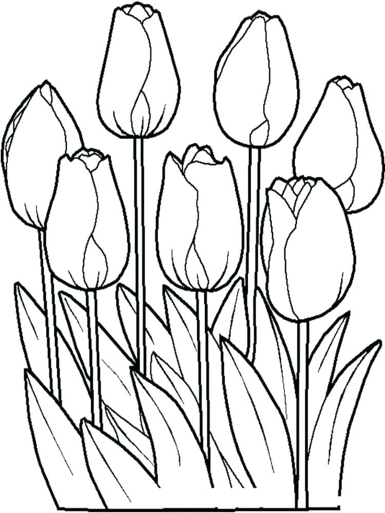 750x1000 Tulip Coloring Page Tulips Coloring Pages Tulip Flower Coloring
