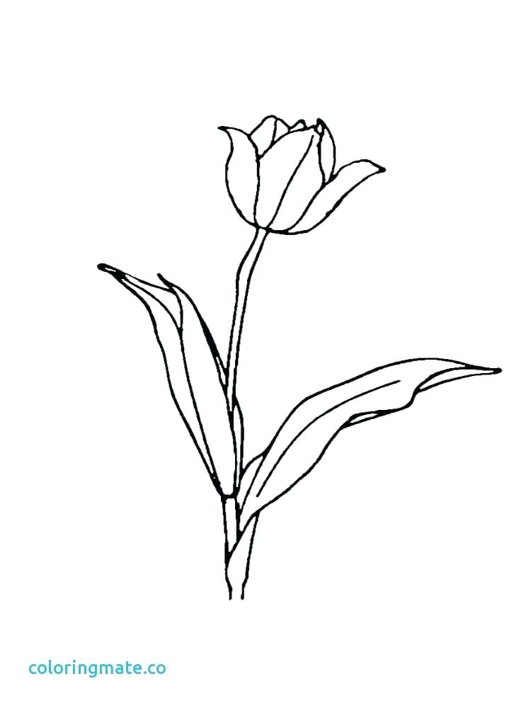 750x1000 Tulip Coloring Pages Coloring Pages Simple Tulip Coloring Page