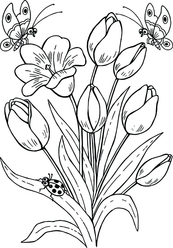 728x1043 Tulip Coloring Pages Medium Size Of Tulip Coloring Pages