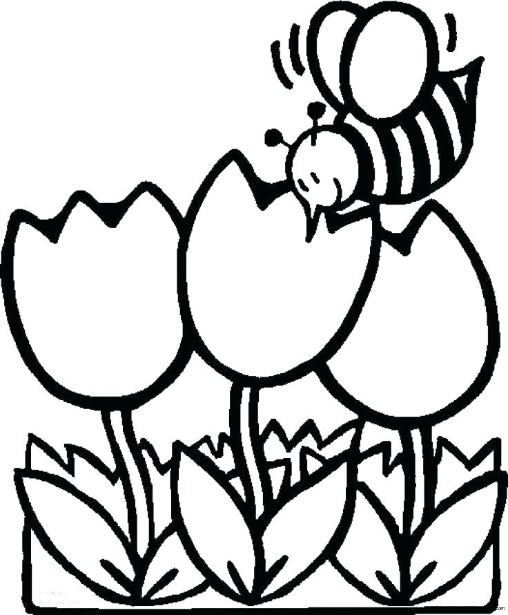 736x890 Tulip Coloring Pages Tulips Template Tulips Flower Coloring Page