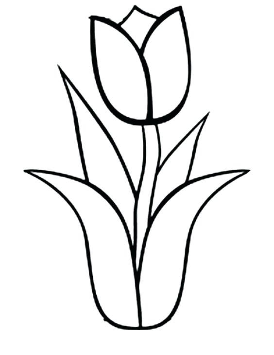 564x730 Tulip Coloring Sheet Tulip Flower Coloring Pages