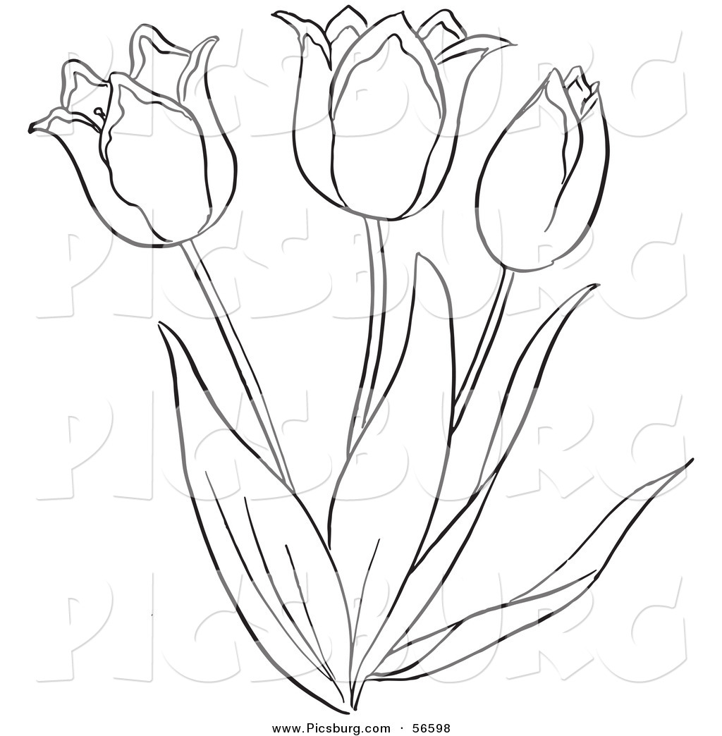 1024x1044 Clip Art Of A Coloring Page Of A Tulip Flower Plant