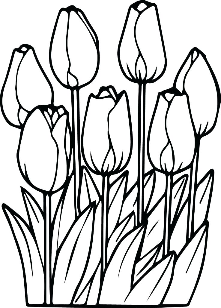 737x1024 Tulips Coloring Pages Printable Realistic Three Page Free