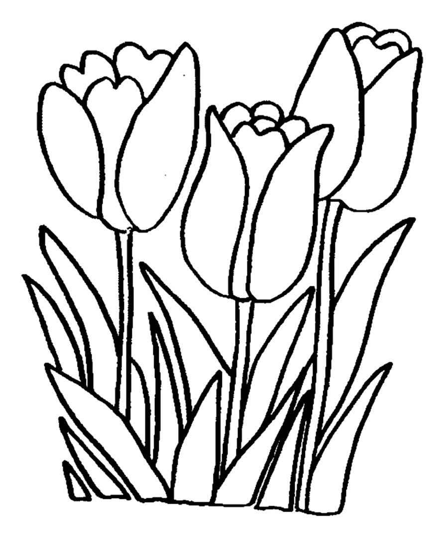 900x1093 Download Coloring Pages Tulip Throughout