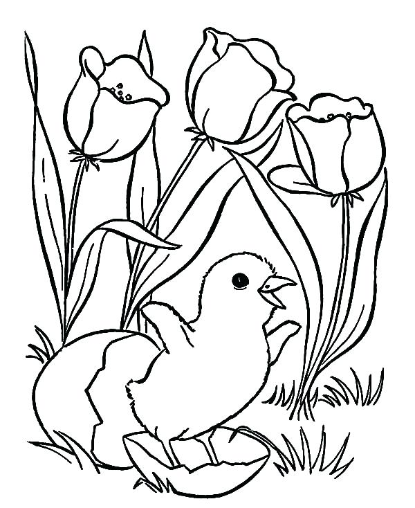 600x734 Easter Flower Coloring Pages Chick Hatching And Tulips Flower