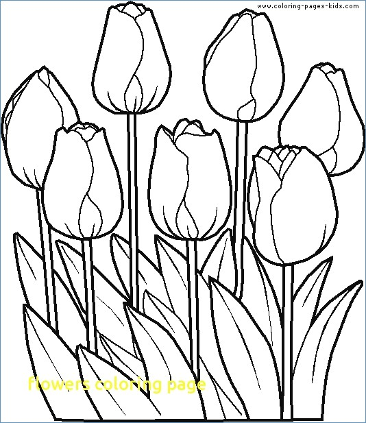 534x617 Flower Coloring Pages Tulip