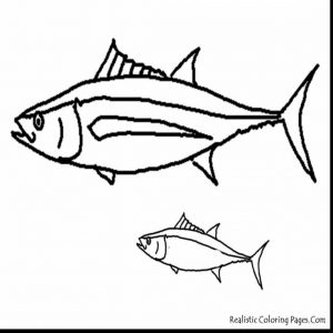 300x300 King Mackerel Coloring Pages New Free Coloring Page Of Salmon Fish