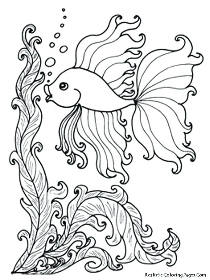 687x916 Animal Fish Coloring Pages To Print Shark Coloring Pages Coloring