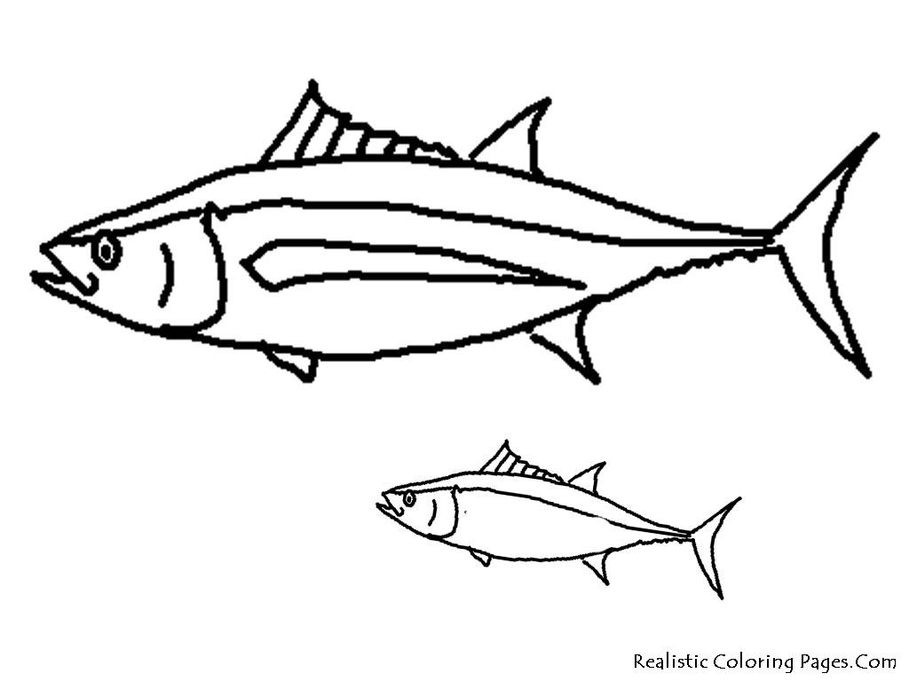 1024x768 Tuna Fish Coloring Page