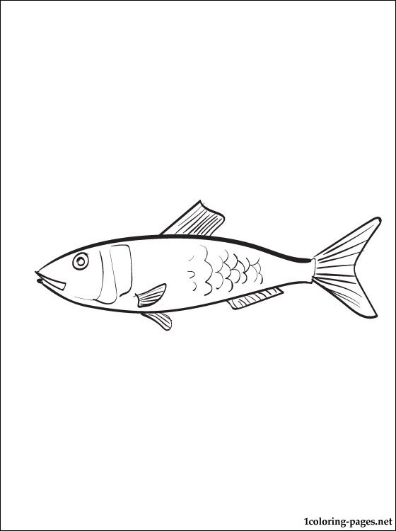 560x750 Tuna Fish Coloring Pages