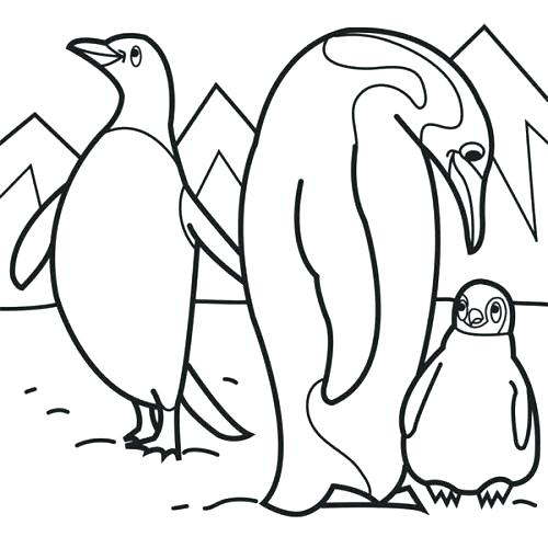 500x500 Arctic Coloring Pages Polar Arctic Animals Coloring Pages Arctic