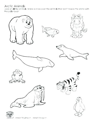 387x494 Arctic Fox Coloring Page Tundra Animals Coloring Pages Arctic
