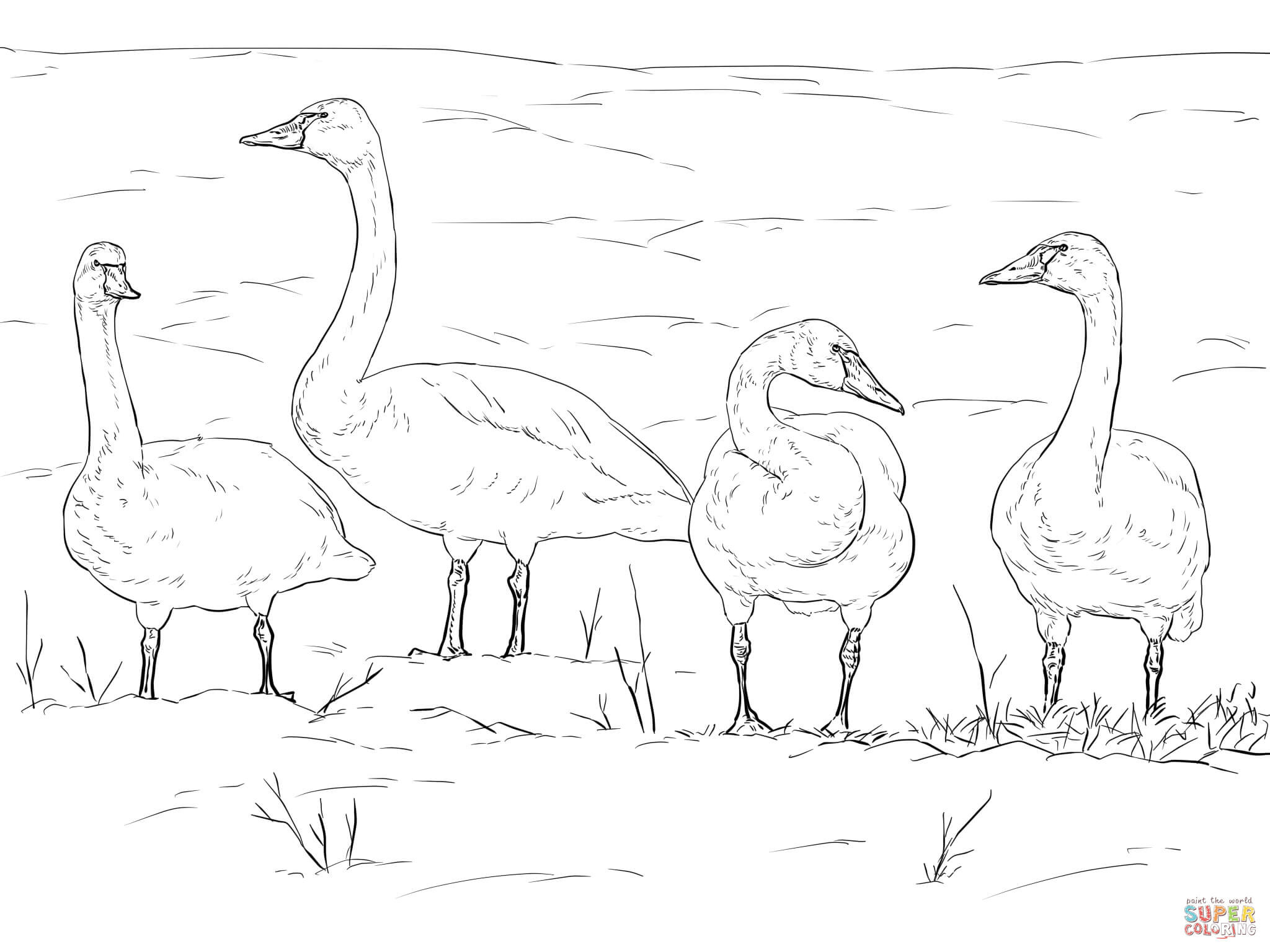 2048x1536 Coloring Pages Of Tundra Animals