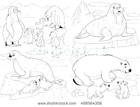 450x347 Arctic Animals Coloring Pages Arctic Animals Coloring Page More