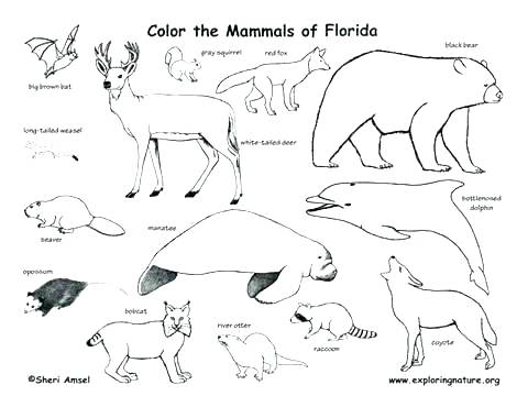 480x370 Mammal Coloring Pages Animals Coloring Pages Printable Coloring