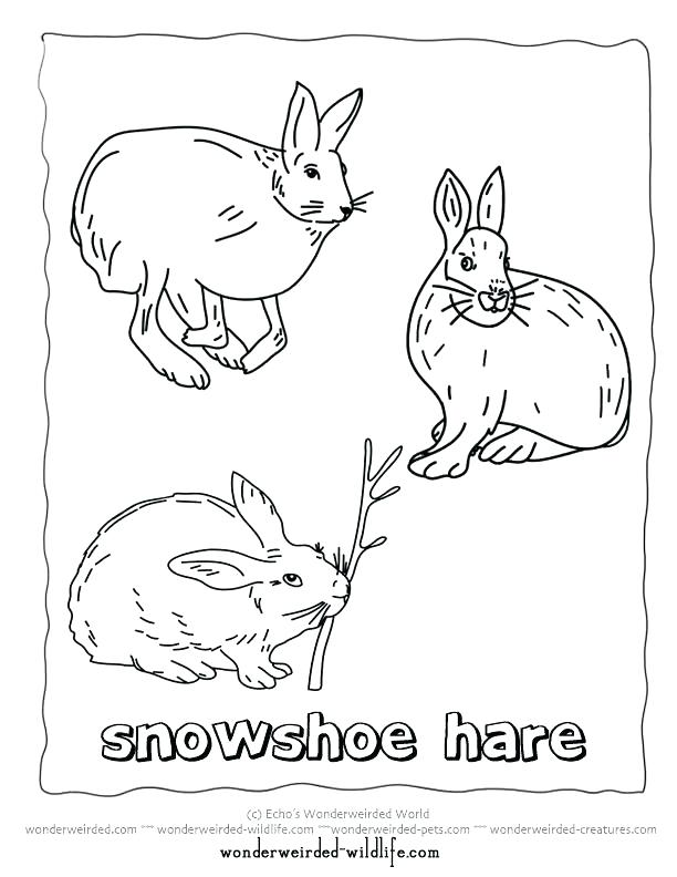 612x792 Arctic Animals Coloring Pages Arctic Animals Coloring Pages