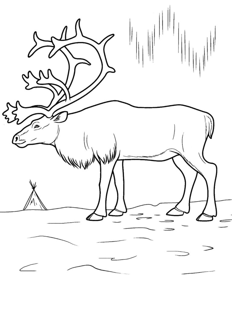 768x1024 Tundra Animals Coloring Pages Collection Coloring For Kids