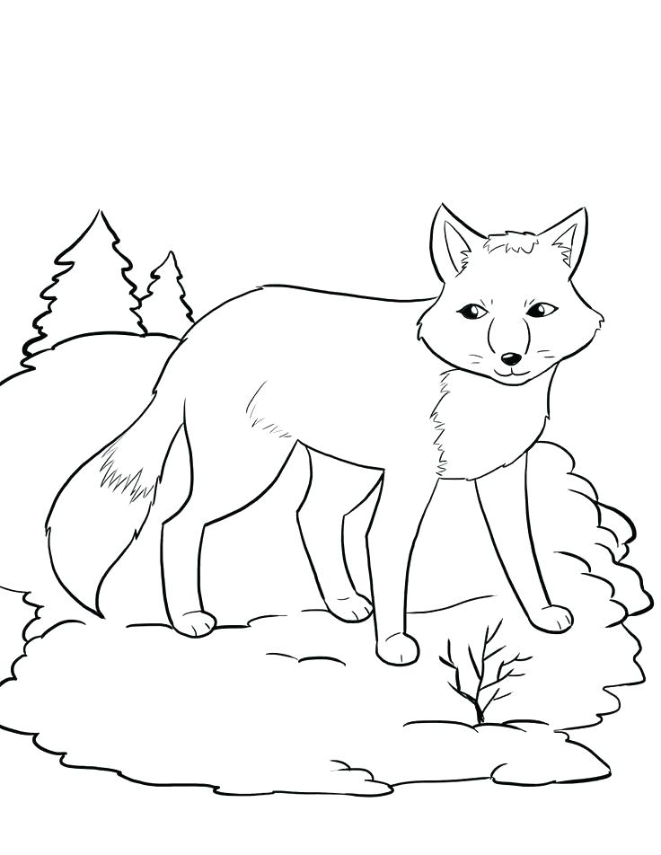 736x952 Tundra Animals Coloring Pages Printable Coloring Book Arctic