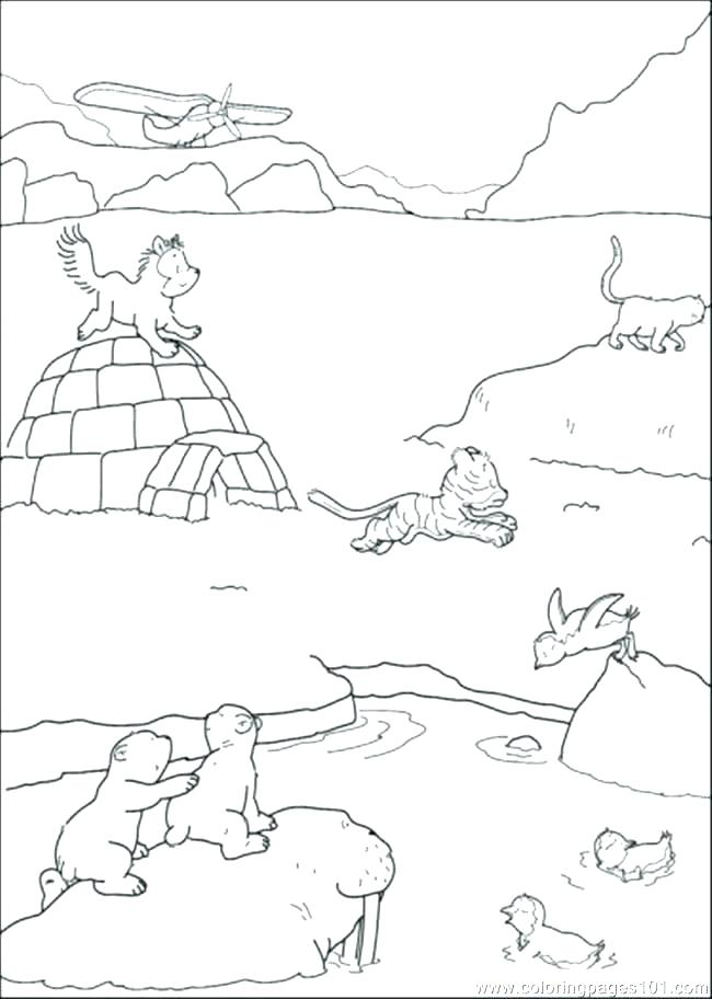 650x912 Walrus Coloring Page Fresh Tundra Animals Coloring Pages Crayola
